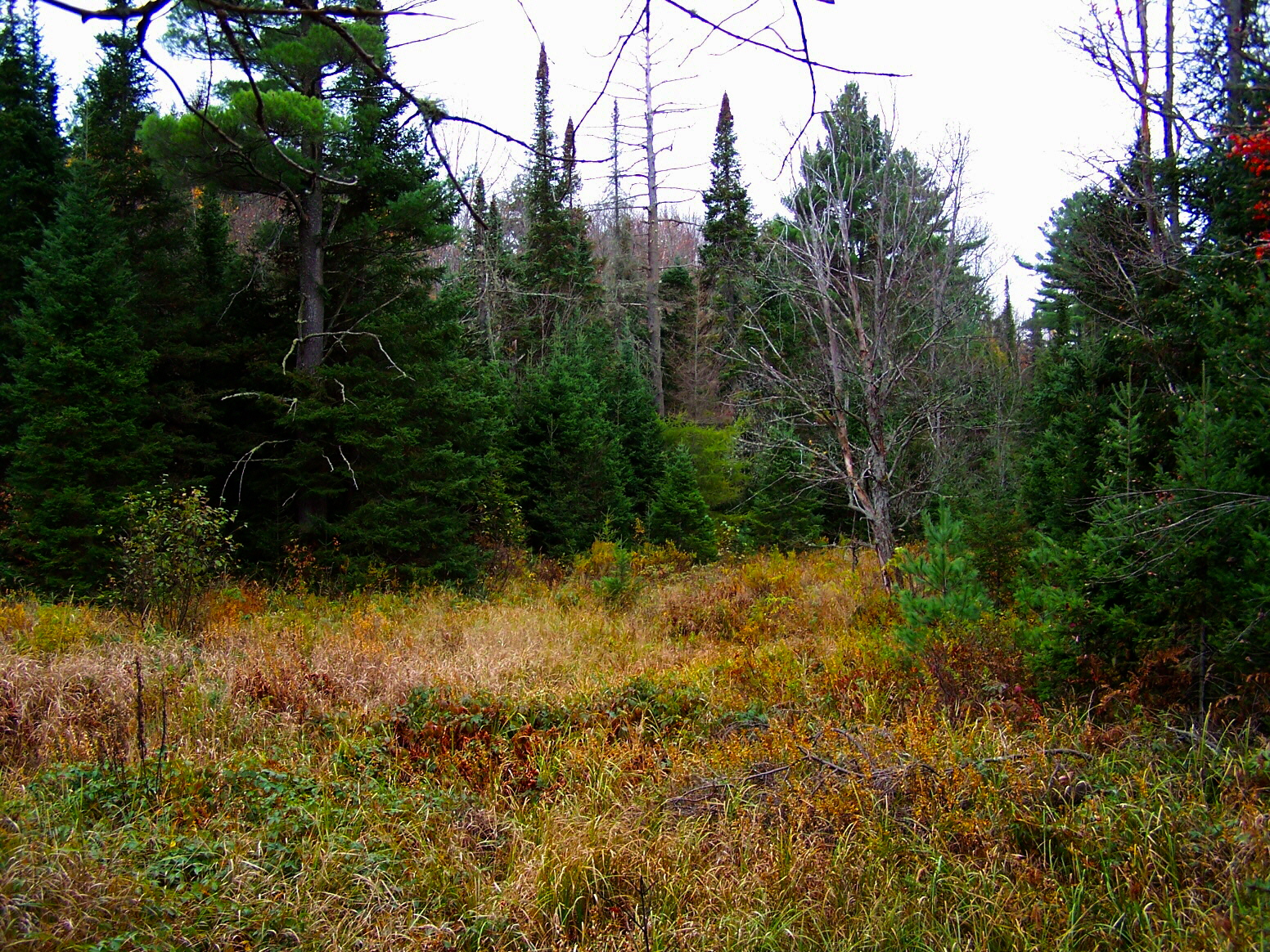 moose licence application newfoundland 2015