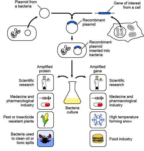 recombinant dna technology applications environment