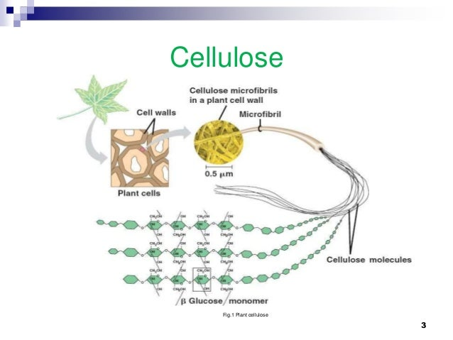 antimicrobial and medical applications of nanocrystalline cellulose