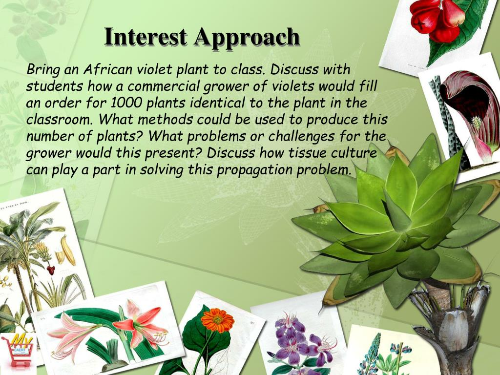 application of tissue culture in horticulture