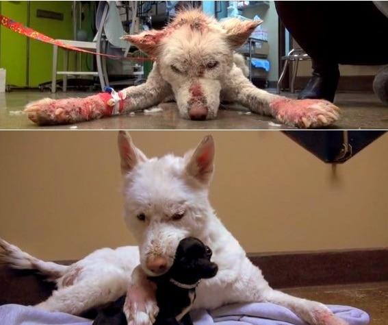 four paws rescue adoption application